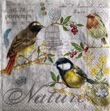 SI13中 F68 414-OISE Les Oiseaux
