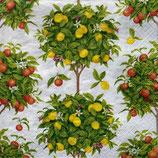 SI5 F11 16380L Citrus Topiaries white