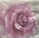 SAGEN1中 S501 SG-80099  Roses Letter
