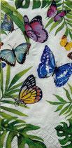 218 051678 Tropical  Butterflies