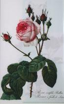 クリアファイル ルドゥーテのバラ *グリーン