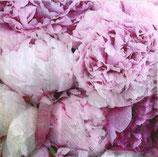 SI14中 F43 75219 Pink Beauty