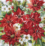 SPX小1 X41 DCX-32513570 Poinsettia all over