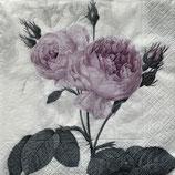 SAGEN1中 S501 SG-80077 Purple Vintage Rose