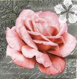 SI中5  F54 DL-21780 Rose of Love