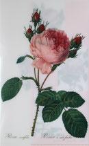 クリアファイル ルドゥーテのバラ- *ピンク