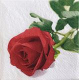 SI14中 F54 367825 Rosa Nobile