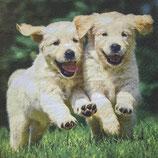 SI18中 F108-1  371055 Happy Puppies   再入荷