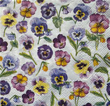 SI17中 F34 13314955  Pansy all over