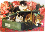 PS Greeting Cards APU-GC57581 Kitty Care Pack