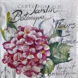SI11中 F33 L807459 Jardin Botanique light rose