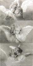 230 *SG85003 Angels