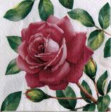 SI14中 F54 TL700600 Special Rose