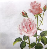 SP小1 F19 C602500 A Rose for You