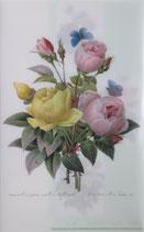 クリアファイル「ルドゥーテのバラ」*P004-05