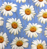 SI中5 F51 016901 Daisies on Blue