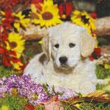 SI18中 F108-1 74995 A Dog's life