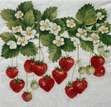 SI18中 F13 13308205 Summer  Fruits 再入荷