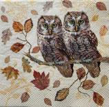SI18中 F70 13315460 Owl  Couple