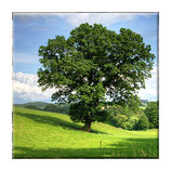 Soul-Tree in Deutschland