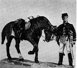 ACW 3051 Horse Handler