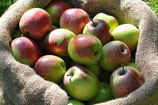 Apfel - Friedberger Bohnapfel | 1 Edelreis