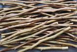 Birne - Köstliche aus Charneux | 1 Edelreis