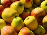 Apfel - Goldparmäne | 1 Edelreis
