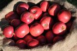 Apfel - Rote Sternrenette | 1 Edelreis