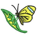 Stickdatei Schmetterling 3-009