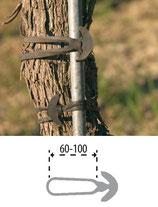 elastico bandex