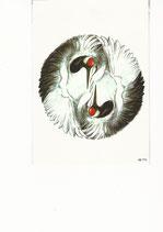 Schwäne yin yang