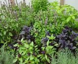 Basil & herb