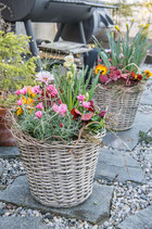 Bepflanzter Saisonkorb