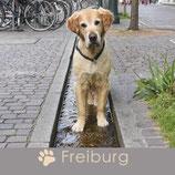 Magnet Freiburg Hund