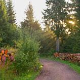Fotoklotz Waldweg