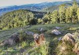 Postkarte SW-Hund
