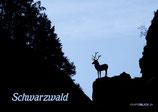 Postkarte SW Hirschsprung