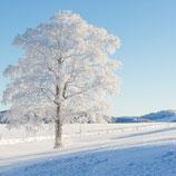 Fotoklotz Winterbaum