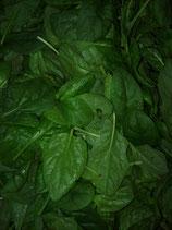 Epinards en feuilles - frais