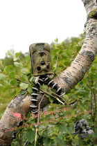 Soporte flexible para trailcams