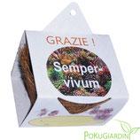 """Eco-Set Regalo  GRAZIE  """"SEMPREVIVO"""" 6 Pezzi"""