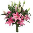 Lilium Orientalis