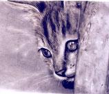 Il soriano - getigerte Katze