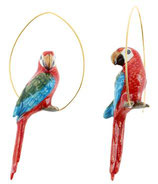 creoles red parrot