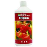 GHE Ripen (fine fioritura)