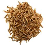 Mehlwürmer (getrocknet)