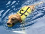 "Schwimmweste ""Easy Lifeguard"""
