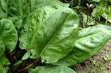 OSEILLE - BARQUETTE DE 6 PLANTS