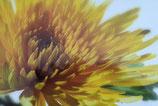 Grußkarte Blumenmotiv